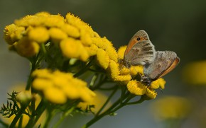 Картинка лето, бабочки, цветы, природа