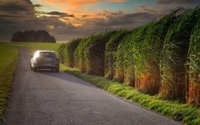 Картинка дорога, поле, машина, лето, небо, трава, листья, свет, закат, тучи, природа, заросли, вечер, шоссе, автомобиль, …