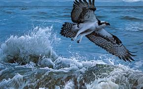 Картинка море, волны, вода, полет, брызги, шторм, птица, рисунок, графика, картина, арт, живопись, ястреб, хищная, скопа, …