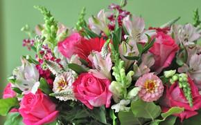 Картинка цветы, фон, розы, букет, композиция, цинния