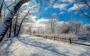 Картинка зима, облака, деревья, забор