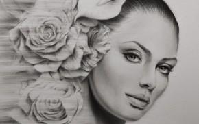 Картинка взгляд, девушка, портрет, розы, живопись, рисунок простым карандашом