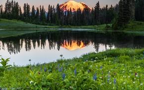Картинка деревья, пейзаж, закат, горы, природа, озеро, отражение, камни, США, заповедник, Национальный парк, Mount Rainier, Маунт-Рейнир, …