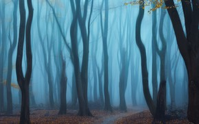Картинка лес, деревья, туман, forest, trees, fog, Yeh
