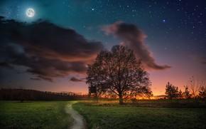 Картинка небо, закат, ночь, дерево, луна, луг, дорожка, тропинка, звёздное небо
