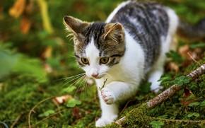 Картинка зелень, кошка, взгляд, морда, природа, поза, котенок, мох, ветка, прогулка, боке, пятнистый