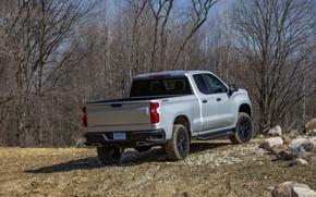 Картинка Chevrolet, кузов, вид сзади, пикап, Custom, Silverado, 2020