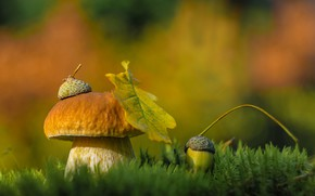 Картинка осень, природа, лист, гриб, мох, шляпка, жёлудь, Александра Юсупова