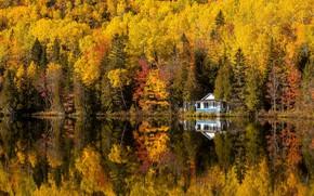 Картинка осень, Canada, Quebec, Saint-Siméon