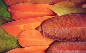 Картинка осень, листья, фон, colorful, texture, background, autumn, leaves