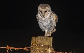 Картинка ночь, сова, охота