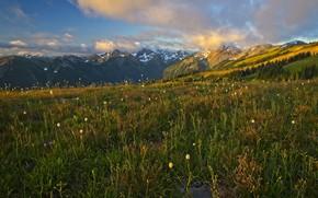 Картинка поле, лес, лето, трава, облака, горы, вершины, луг