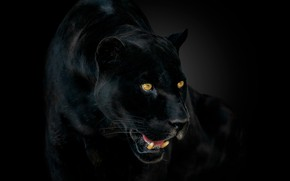 Картинка глаза, пантера, клыки, ягуар, jaguar, eyes, panther, fangs