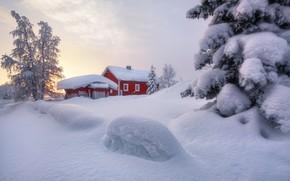 Картинка зима, снег, деревья, ель, сугробы, домик, Швеция, Сергей Алещенко