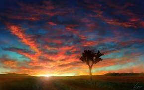Картинка небо, закат, природа, дерево