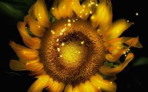 Картинка цветок, подсолнух, компьютерный дизайн