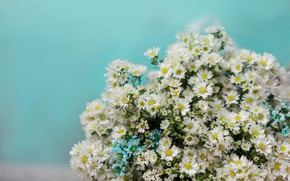 Картинка цветы, фон, ромашки, букет, белые