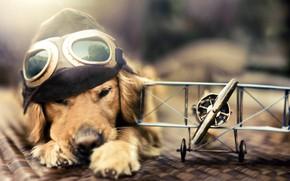 Картинка игрушка, собака, самолёт
