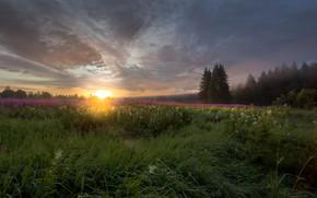 Картинка поле, лето, солнце, пейзаж, природа, туман, восход, рассвет, утро, травы, леса, Карелия, иван-чай, кипрей, Vaschenkov …