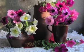 Картинка цветы, салфетка, петуния, петунии