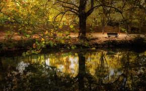 Картинка осень, город, скамья