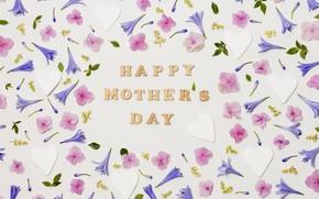 Картинка цветы, фон, праздник, бутоны, Счастливый, День Матери