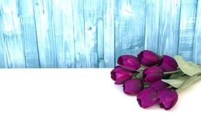Картинка цветы, фиолетовые, тюльпаны, fresh, wood, flowers, tulips, purple