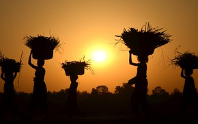 Картинка sunset, women, harvest