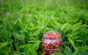 Картинка трава, ягоды, земляника, банка