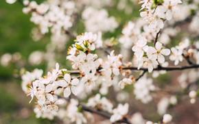 Картинка Цветы, Природа, Весна, Цветок, Растение, Сад, Ветка, Ветки, Растения, Nature, Flower, Flowers, Color, Spring, Leaf, ...