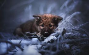 Картинка холод, природа, собака, щенок