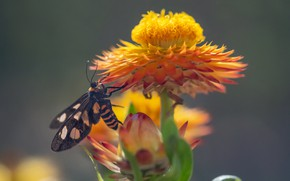 Картинка цветок, бабочка, Fleur Walton