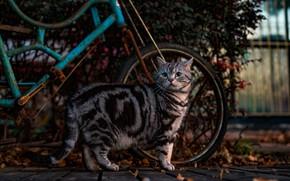 Картинка кошка, велосипед, темный фон