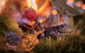 Картинка листья, макро, природа, малина, мох, ягода, жаба, боке