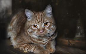 Картинка кот, взгляд, фон, котейка