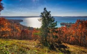 Картинка море, осень, природа, дерево, ель