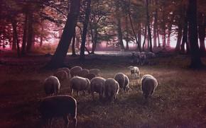 Картинка лес, трава, взгляд, деревья, рендеринг, поляна, овцы, волк, стая, шкура, нападение, волки, камуфляж, овечки, стадо, …