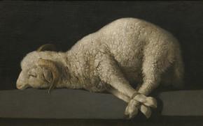 Картинка Агнец Божий, Francisco de Zurbaran, 1635-1640