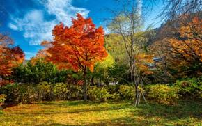 Обои осень, лес, листья, деревья, парк, colorful, forest, landscape, park, autumn, leaves, tree, fall