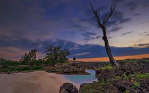 Картинка пляж, дерево, бунгало