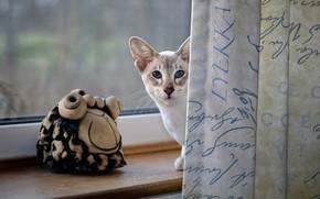 Картинка кошка, кот, взгляд, окно, подоконник, шторы, голубые глаза, фигурка
