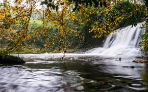 Картинка осень, листья, ветки, природа, листва, водопад, водоем