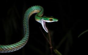 Картинка ночь, природа, змея, хищник, пасть, охота, рептилия, хладнокровное животное