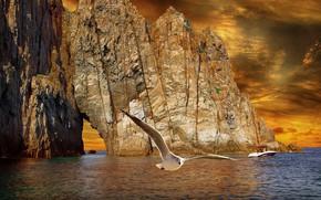 Картинка море, рендеринг, скалы, птица, берег, чайка