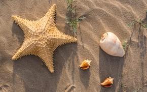 Картинка песок, пляж, лето, ракушки, summer, beach, sea, sand, marine, starfish, seashells