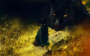 Картинка кошка, трава, кот, морда, кошки, природа, поза, рендеринг, две, пантера, дружба, пара, черная, лежит, доска, …