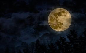 Картинка небо, облака, деревья, луна, спутник