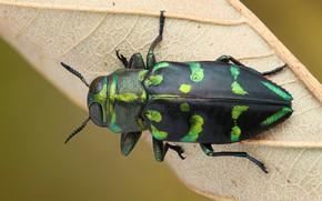 Картинка макро, зеленый, фон, листок, жук, насекомое, полосатый, пятнистый