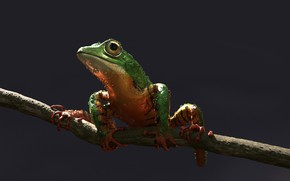 Картинка лягушка, арт, Alessandro Mastronardi, Amazon tree frog: tiger stripes color variation