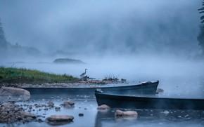 Картинка пейзаж, природа, туман, река, рассвет, птица, утро, цапля, Урал, Андрей Чиж, Чусовая